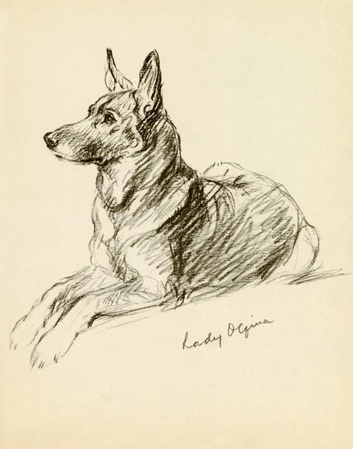 Art Prints of Lady Olfina, Sitting German Shepherd by Lucy Dawson