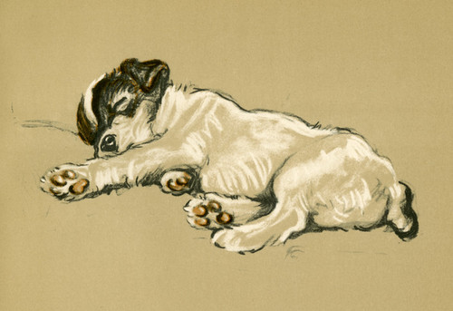 Art Prints of Mike, Terrier Puppy by Lucy Dawson