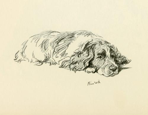 Art Prints of Nimrod by Lucy Dawson