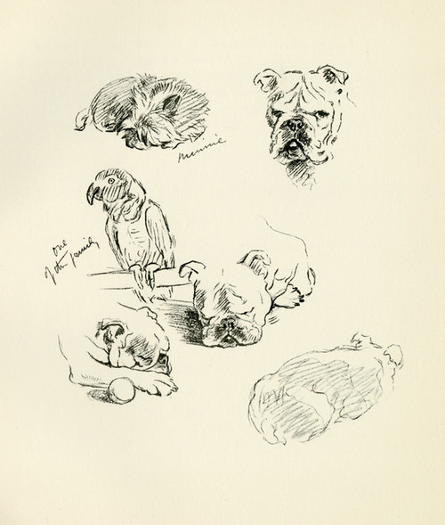 Art Prints of One of the Family by Lucy Dawson