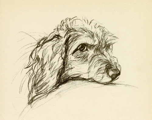 Art Prints of Oonagh, Head Resting, Wire Haired Dachshund by Lucy Dawson