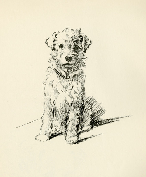 Art Prints of Patch, Wire Haired Terrier by Lucy Dawson