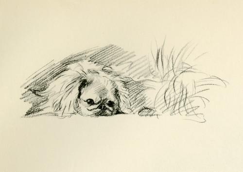 Art Prints of Pekingese 6 by Lucy Dawson