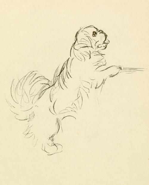 Art Prints of Pekingese 4 by Lucy Dawson