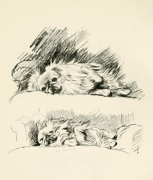 Art Prints of Pekingese 2 by Lucy Dawson