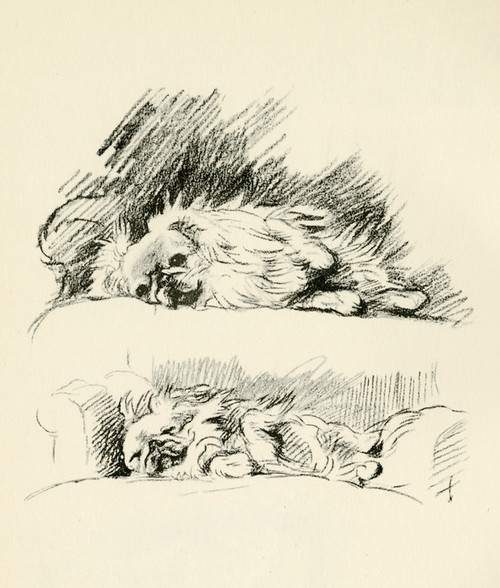 Art Prints of Pekingese 2 by Lucy Dawson