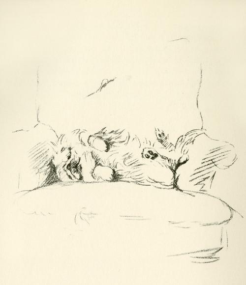 Art Prints of Pekingese Sleeping in a Chair by Lucy Dawson