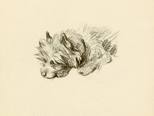Art Prints of Sally, Cairn Terrier by Lucy Dawson