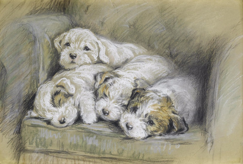 Art Prints of Sealyham Puppies by Lucy Dawson
