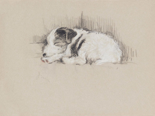 Art Prints of Sleeping, Wire Haired Terrier by Lucy Dawson