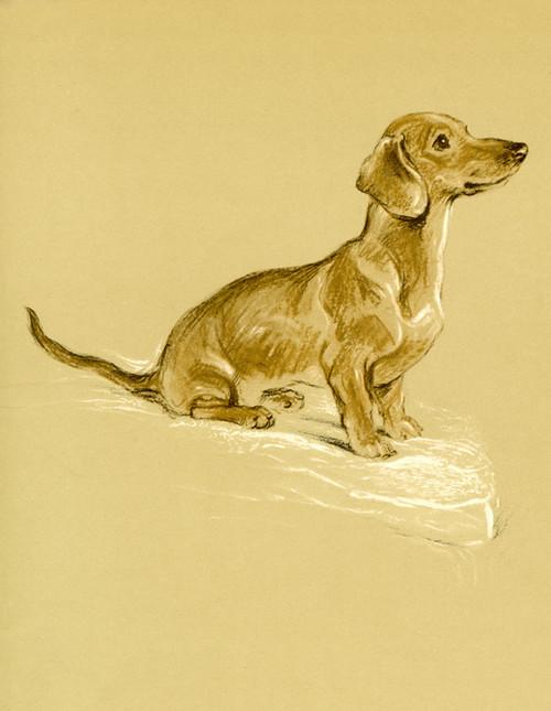 Art Prints of Snoodle, Dachshund by Lucy Dawson