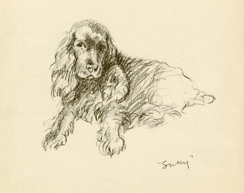 Art Prints of Spaniel, Susan by Lucy Dawson