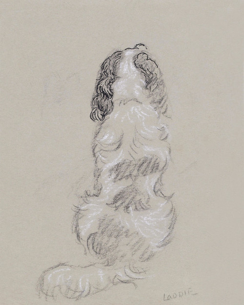 Art Prints of Spaniel, Laddie by Lucy Dawson