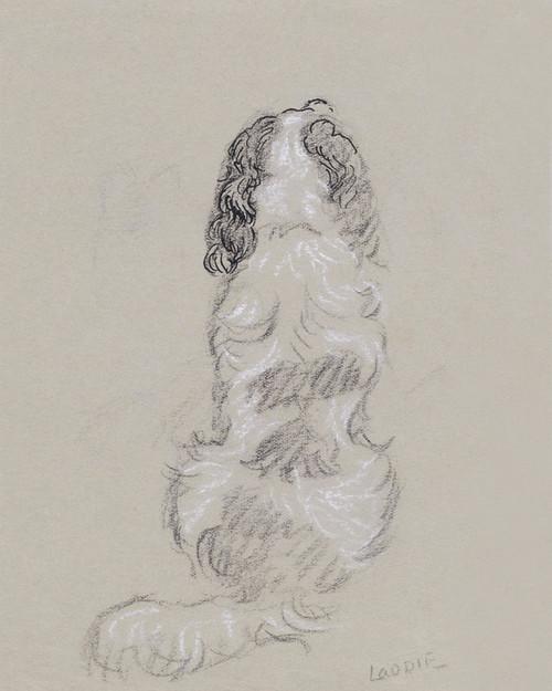 Art Prints of Spaniel, Laddie by Lucy Dawson