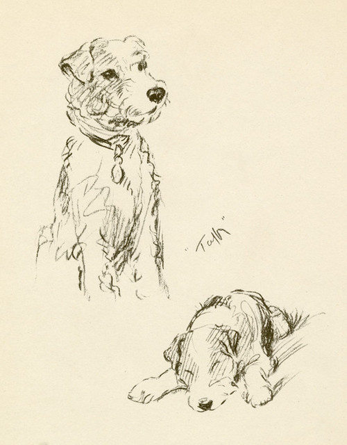 Art Prints of Taffy Sitting and Laying Down by Lucy Dawson