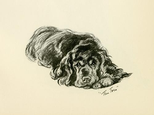 Art Prints of Tan Toes, Black Cocker Spaniel by Lucy Dawson