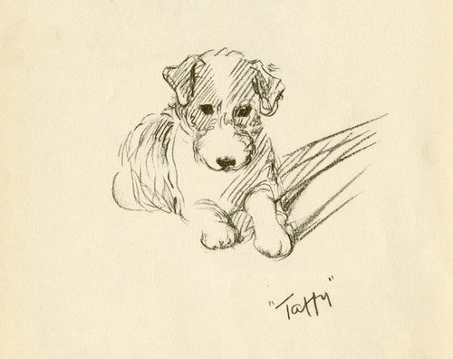 Art Prints of Taffy, Wire Haired Terrier by Lucy Dawson