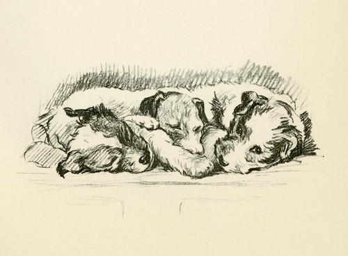 Art Prints of Three Puppies by Lucy Dawson