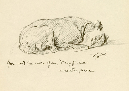 Art Prints of Toby, Greyhound by Lucy Dawson