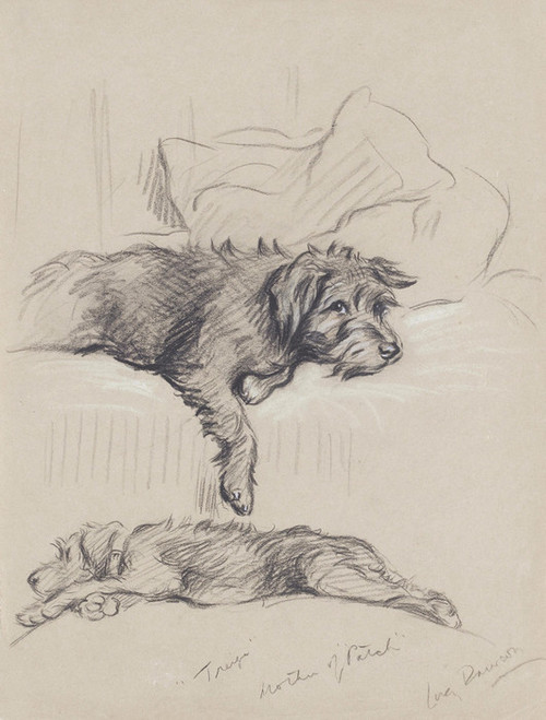 Art Prints of Treize, Mother of Patch, Wire Haired Terrier by Lucy Dawson