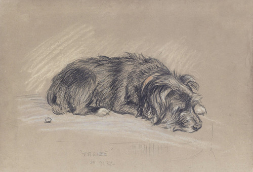 Art Prints of Treize, Sleeping Wire Haired Terrier by Lucy Dawson