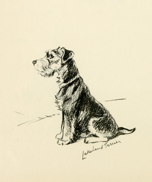 Art Prints of Trig by Lucy Dawson