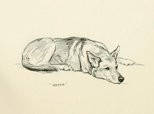Art Prints of Wanda, German Shepherd by Lucy Dawson