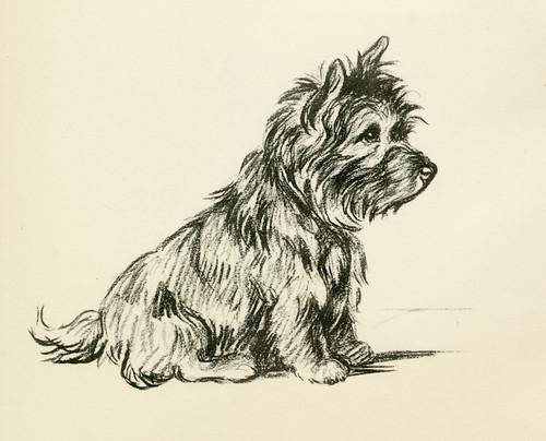 West Highland White MATTED Dog Print Lucy Dawson
