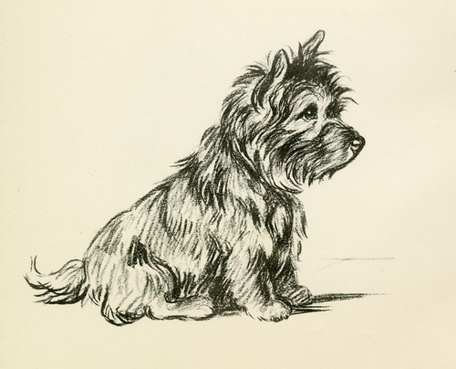 Art Prints of West Highland Terrier by Lucy Dawson