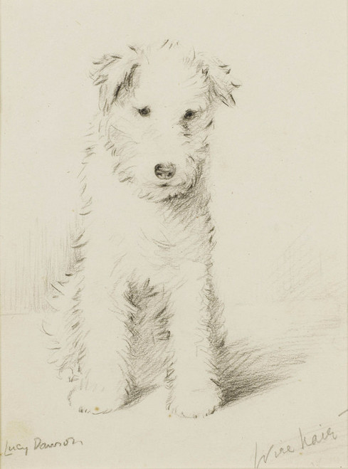 Art Prints of Wire Hair Puppy by Lucy Dawson