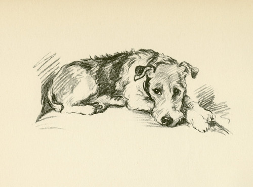 Art Prints of Wire Haired Terrier by Lucy Dawson