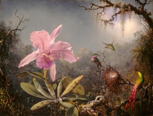Art Prints of Cattleya Orchid and Three Hummingbirds by Martin Johnson Heade