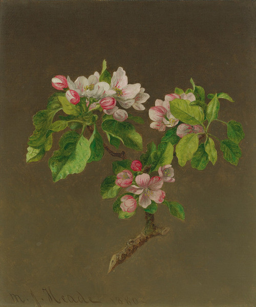 Art Prints of Apple Blossom by Martin Johnson Heade