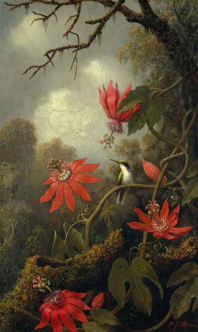 Art Prints of Hummingbird and Passion Flowers by Martin Johnson Heade