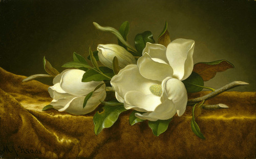 Art Prints of Magnolias on Gold Velvet Cloth by Martin Johnson Heade