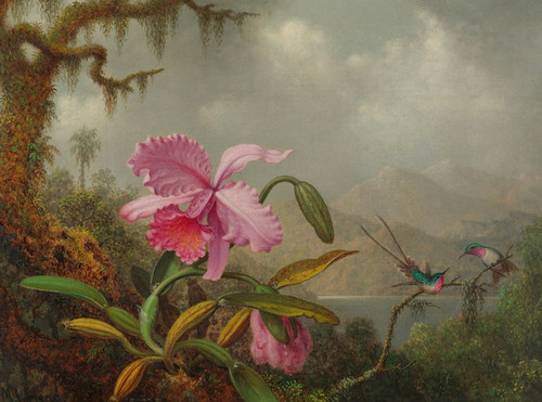 Art Prints of Orchids and Hummingbirds by Martin Johnson Heade