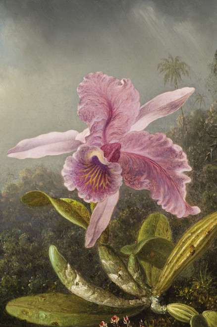 Art Prints of Orchid with Two Hummingbirds, detail by Martin Johnson Heade