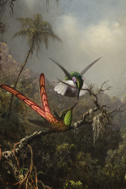 Art Prints of Orchid with Two Hummingbirds by Martin Johnson Heade