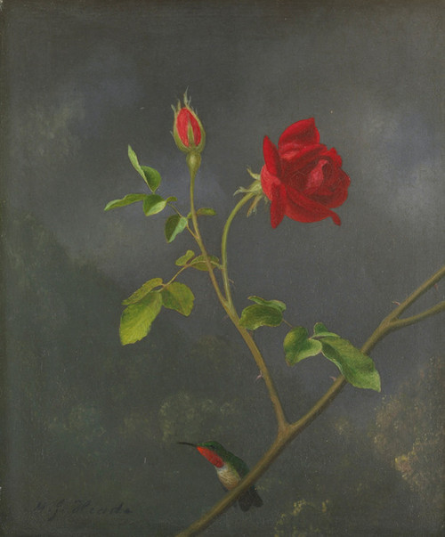 Art Prints of Red Rose with Ruby Throat by Martin Johnson Heade
