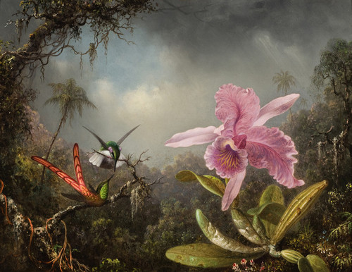 Art Prints of Two Hummingbirds near a Pink Orchid by Martin Johnson Heade