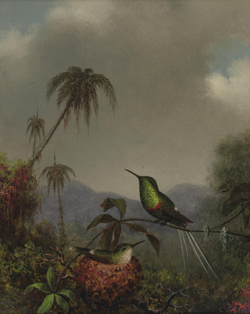 Art Prints of Two Thorn-Tails, Brazil by Martin Johnson Heade