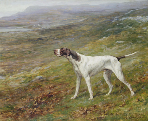 10x8 In Photo Art Poster//Print ENGLISH POINTER