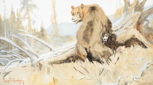 Art Prints of Bear 1908 by Philip Goodwin