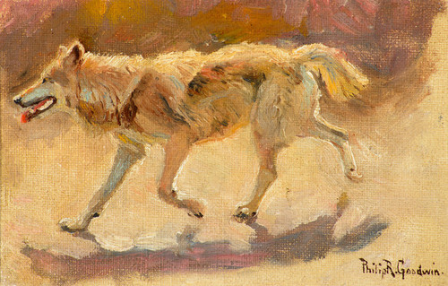 Art Prints of Wolf by Philip Goodwin