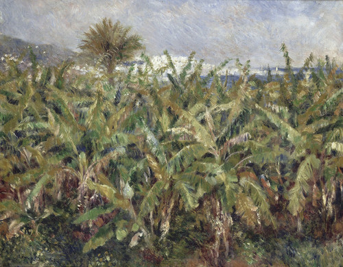 Art Prints of Field of Banana Trees by Pierre-Auguste Renoir
