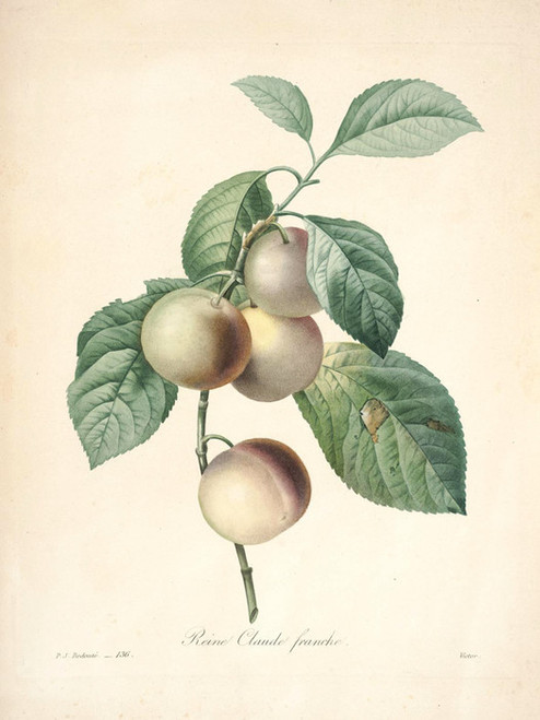 Art Prints of Crab Apples, Plate 138 by Pierre-Joseph Redoute