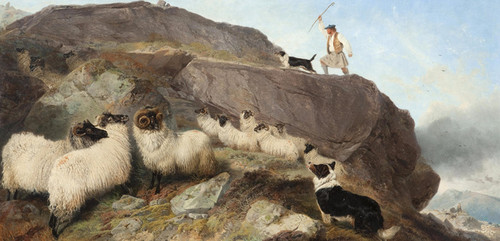 Art Prints of Sheep Gathering, Isle of Skye by Richard Ansdell