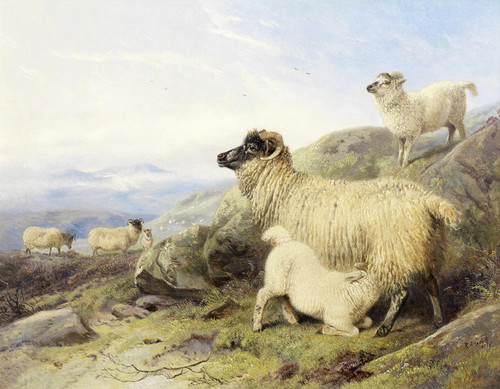 Art Prints of Sheep on a Mountainside by Richard Ansdell