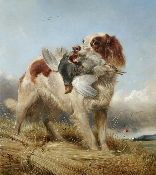 Art Prints of English Setter Retrieving Partridge by Richard Ansdell
