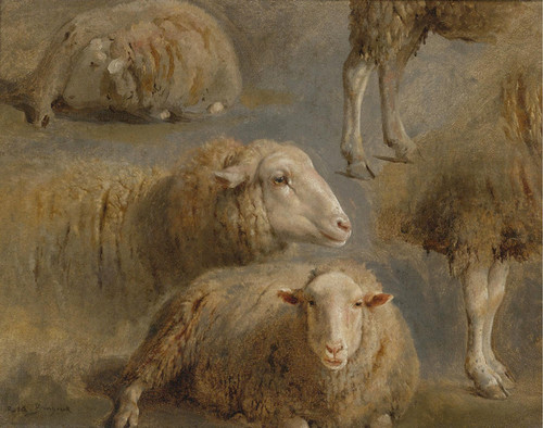 Art Prints of A Study of Sheep by Rosa Bonheur